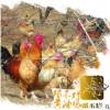 邓不烂黄油老母鸡正宗土鸡|油黄、腿细、冠小|一年生林地放养鸡