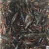 2-4小青小红龙虾 潜江小龙虾 清水虾子热销批发