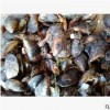 供应 海虹 青口贝 紫贻贝 现货贝类 活海鲜批发