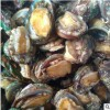 供应 鲍鱼 各个规格 鲜活贝类活海鲜批发