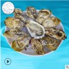 鲜活牡蛎 海蛎子价格 食用生蚝定制山东食用型鲜活海鲜水产加工厂