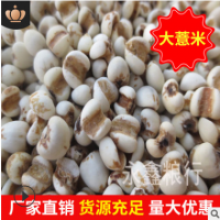 批发贵州大薏米 薏米仁 薏苡仁 薏仁米 五谷杂粮 厂家直销