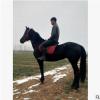 骑乘马好驯养吗半血马批发市场价格旅游观光骑乘用马出售