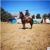 哪有卖骑乘马的半血马马价格养马技术