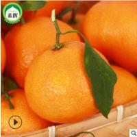5斤装(16个以内)四川特产爱媛38号 非脐橙手剥柑果冻橙一件代发