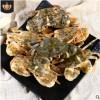 产地鲜活石头蟹全国供应花盖蟹石闸蟹酒店食材海鲜水产批发