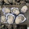 鲜活牡蛎 新鲜海蛎 海鲜排档 野生生蚝批发烧烤专用批发