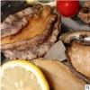 山东特产冻鲜鲍鱼批发 10-12头一斤鲍鱼 厂家产地直供鲍鱼品质好