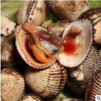 厂家直销鲜活毛蛤蜊 新鲜蛤蜊毛蜊血蛤大毛蛤生吃刺身水产贝类