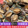 海鲜批发 冷冻小鲍鱼 东山宫前湾海鲜带壳鲍鱼 顺丰发货水产