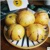云南石林人参果 圆果应季水果现摘现发 黄果发货 5斤装