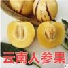 云南人石林人参果5斤圆果黄肉汁水丰富 夏季解渴新鲜采摘新鲜水果