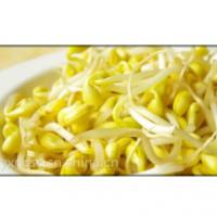 新农村绿色蔬菜—豆芽菜