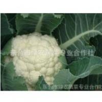 供应西兰花【江苏省无公害蔬菜基地-新街镇】