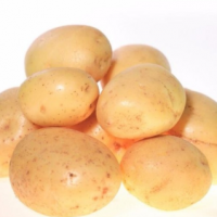 供应厂家优惠价 出口保鲜荷兰土豆 马铃薯