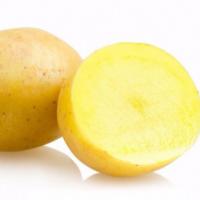 供应 土豆 土豆种子 脱毒马铃薯种子费乌瑞它一级种薯 荷兰15土豆种薯