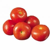 供应 西红柿 欢迎订购 质量保证