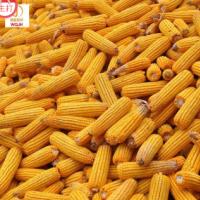 陕北吴起新货干玉米粒非转基因饲料包邮 单品主打