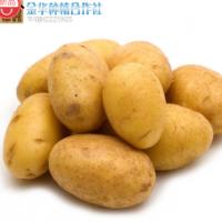 2015年新鲜蔬菜/黄土地/马铃薯/土豆全店满10斤包邮