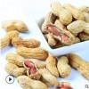 厂家批发EOM 零食特产炒货带壳大包装核桃咸干味香酥小花生16斤装