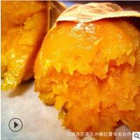 批发供应电烤箱烤红薯用的 山东地瓜烟薯25鲁香568口感软糯香甜