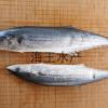 现货供应批发大马鲛鱼冷冻海鲜包邮可来电详询订购量大价优