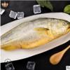 [顺丰]2条装青岛海捕野生大黄鱼 新鲜海鲜冷冻水产去腮鳞内脏每日