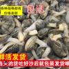 赣榆海头 海鲜水产鲜活 花蛤蜊 花蛤 花甲 包活 贝类直销批发海鲜