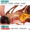 湖北鲜活小龙虾清水虾全规格厂家全国现货批发龙虾店供应生态养殖