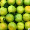 现摘江西寻乌孕妇水果10斤装蜜桔 产地直供新鲜蜜橘 多维C蜜橘