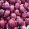 红皮洋葱种子紫皮洋葱头种子 洋葱种子 抗病产量高 种子公司包邮