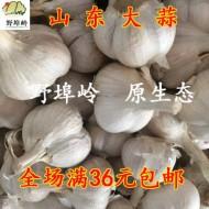 山东大蒜 农家自种大蒜 脆辣香 饺子伴侣 500克