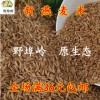 山东临沂沂蒙山区 当季优质燕麦米 燕麦仁 粗粮杂粮500克