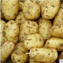 马铃薯新鲜蔬菜土豆