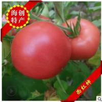 香甜味美海阳普罗旺斯西红柿 好吃不贵可生吃西红柿