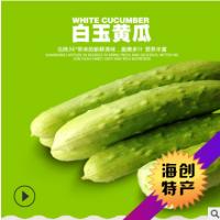 多汁香甜海阳白玉水果黄瓜 好吃不贵新鲜水果小黄瓜批发