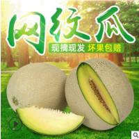 网纹瓜 山东新鲜水果香瓜网纹瓜 新鲜甜瓜水果哈密瓜果园供应