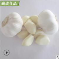新鲜蒜头大蒜头调味品食用辛辣蔬菜干蒜邳州特产白紫皮蒜批发供应