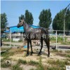 出售租赁可骑乘的跑马 影视马 纯血价格 半血多少钱 出租阿拉伯马