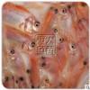 直销零售/批发红罗非鱼苗彩虹雕红腊鱼苗珍珠腊鱼苗活体淡水养殖