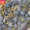 外塘养殖场北美小鳄杂佛龟苗批发大小乌龟活体水龟水族观赏龟