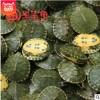 【呈宝龟】密西西比黄耳龟大小乌龟活体龟苗巴西龟批发