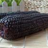 山西忻州黑玉米棒10穗220g新鲜紫甜糯玉米非转基因真空包邮一件