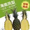 海南金钻凤梨17号 新鲜水果 非菠萝水果 香甜可口 削皮即食