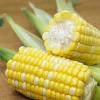 新鲜玉米水果玉米5斤10斤装一件代发甜玉米生吃嫩甜脆玉米