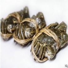 活河蟹 盘锦鲜活3.0母肥蟹