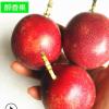 广西新鲜热带水果百香果纯鸡蛋果西番莲酸甜现摘现发 5斤中果