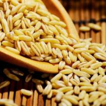 武川燕麦米 全胚芽 燕麦仁 内蒙古五谷杂粮全胚芽500g 裸燕麦
