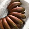 产地货源红美人香蕉 新鲜水果包邮当季红皮香蕉一件代发代理
