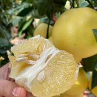 葡萄柚 台湾鸡尾葡萄柚西柚五斤大果4-6个包邮 一件代发